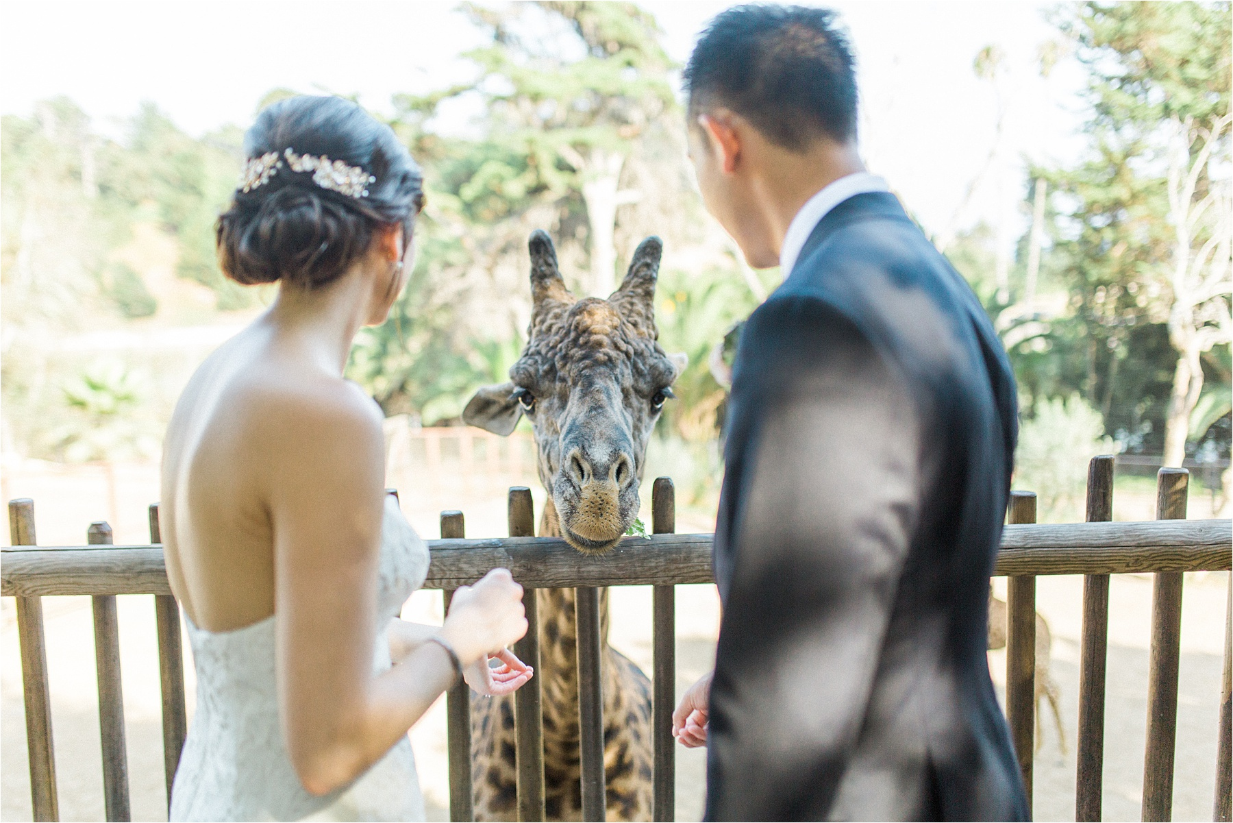 Santa Barbara Zoo Wedding, Santa Barbara Wedding Photographer, Sarah Ellefson Photography, Santa Barbara Wedding Photos, Santa Barbara Zoo Wedding Photos, Santa Barbara Engagement Photographer, Santa Barbara Wedding, Santa Barbara California Wedding